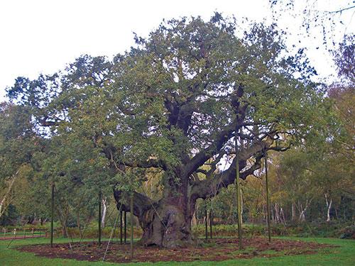 sherwood-forest