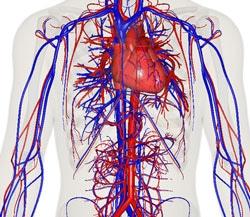 blood-circulation
